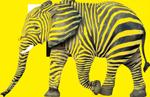 éléphant enrobé zèbre